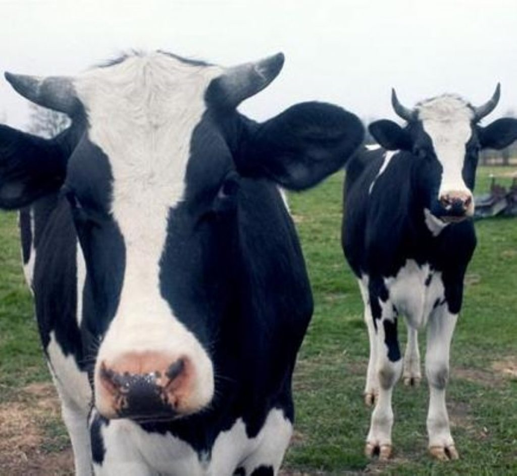 Taxpayers' Alliance believe cows and sheep should replace council gardeners.
