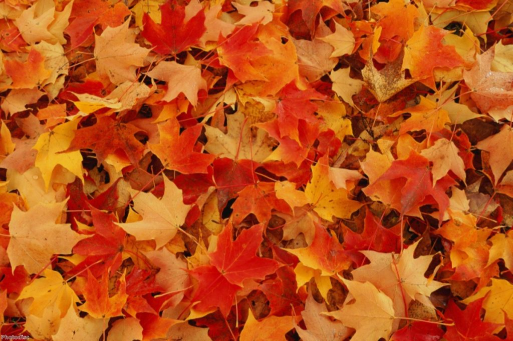 The autumn statement. Yes it is technically still autumn, even if it's pretty damn cold.