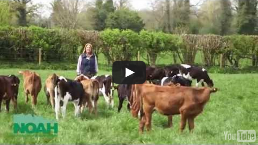 The health and welfare of Britain's pets and livestock are at the heart of everything NOAH does.