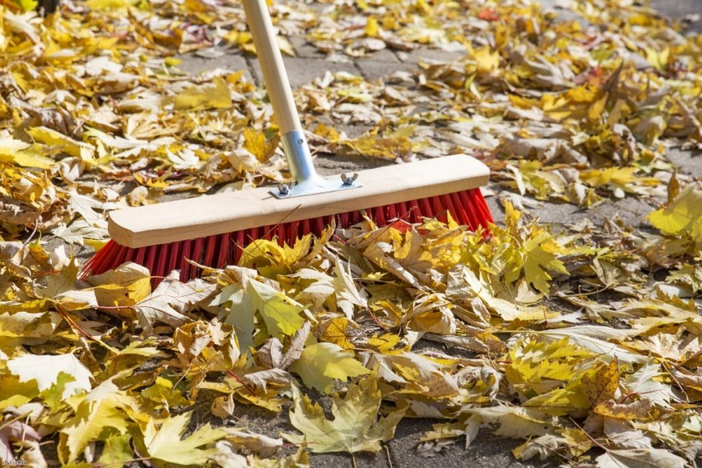 """""""Two elderly ladies in Birmingham have been threatened with fines for sweeping up leaves."""""""