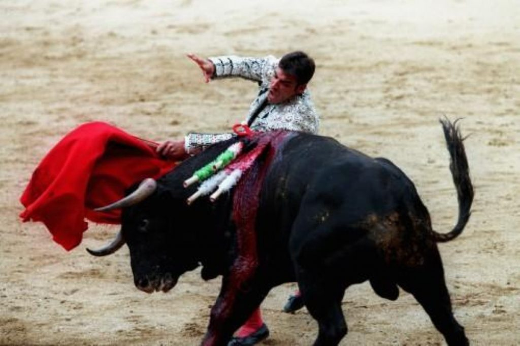 This year alone, tens of thousands of bulls will be killed in Spanish bullfights