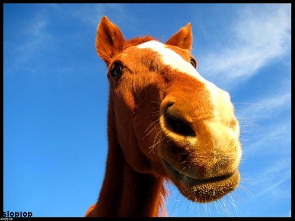 Looking a gift horse in the mouth. We know. That's not even a pun.