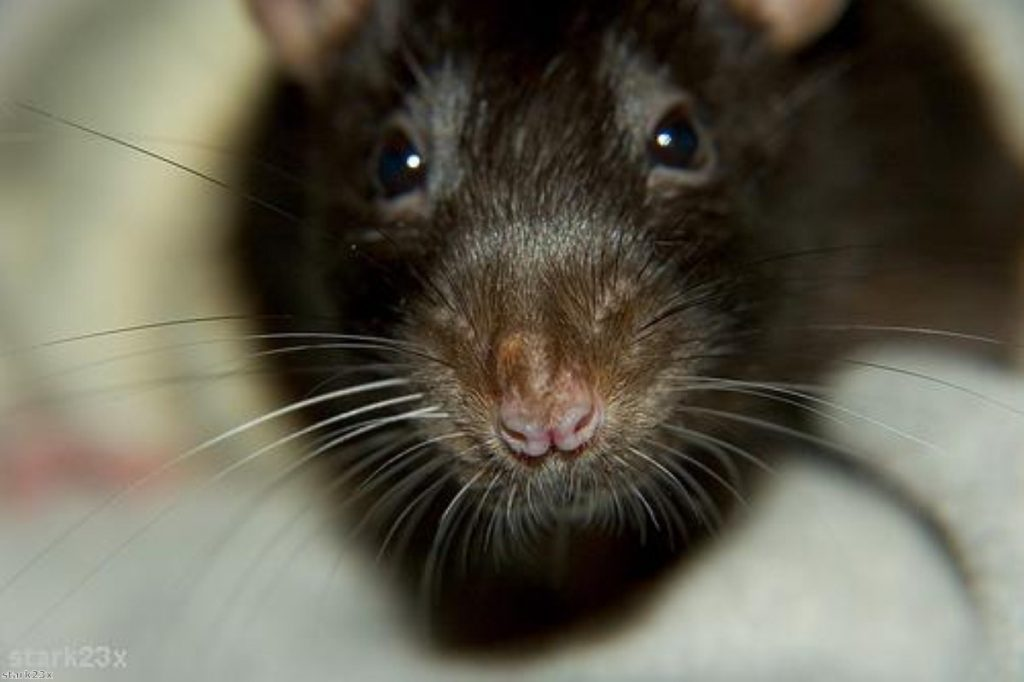 """Wandsworth prison """"alive with rats"""""""