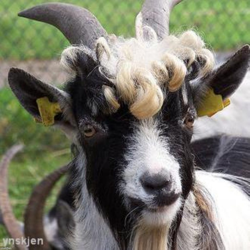Mike Fabricant. Goats. Two birds with one picture.