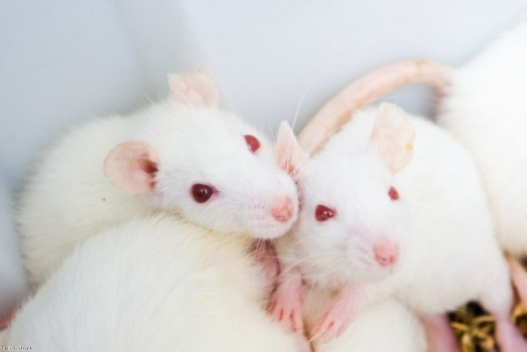 A legal case could render the ban on cosmetic animal testing meaningless