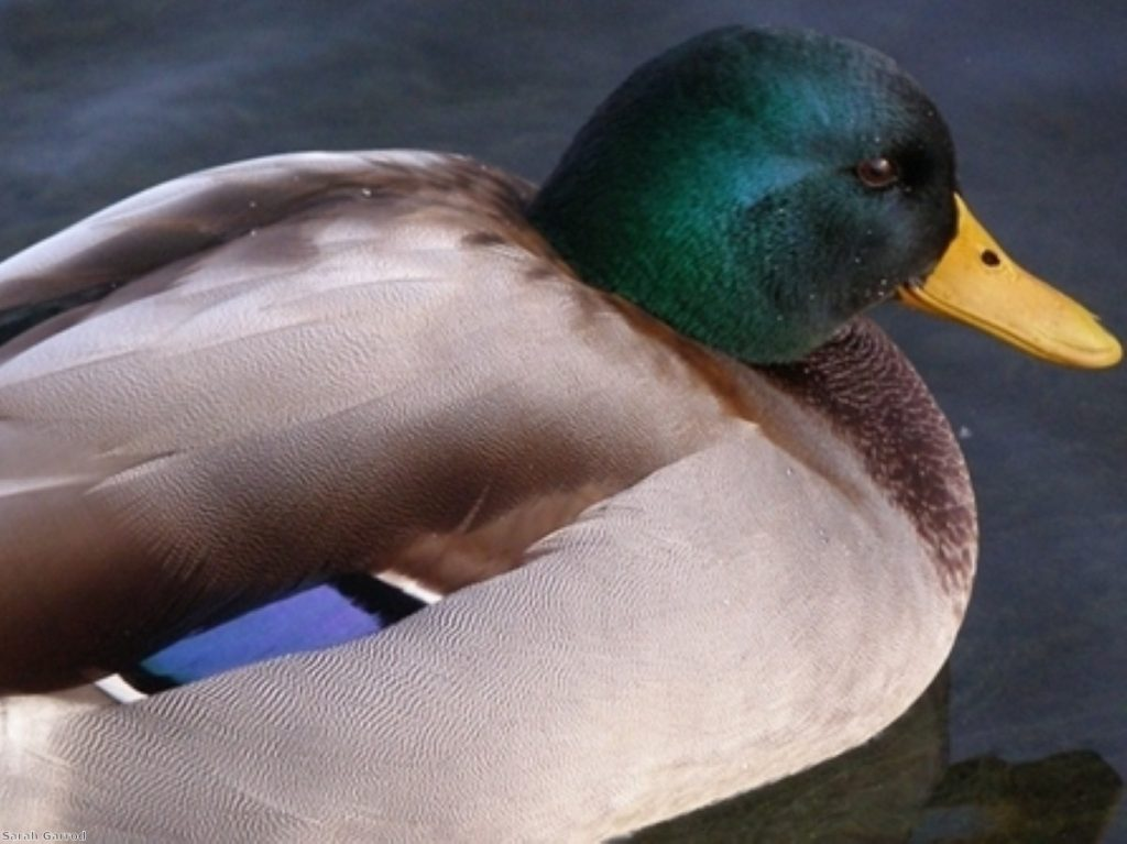 Ducks and expenses: The symbol of allowances has been sold